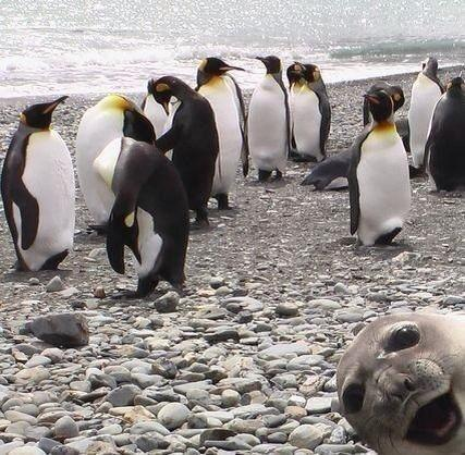 Seal says hello - ok it was nothing like this but still....