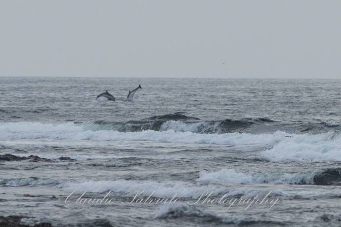 claudio dolphins
